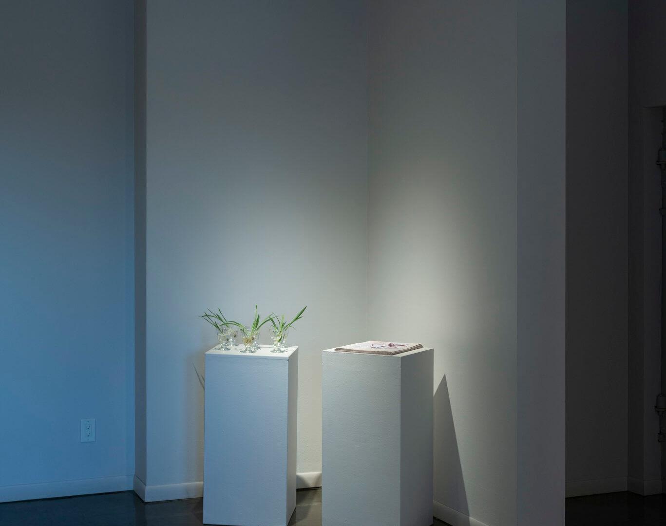 Installation view of Futures Barren / Futures Abundant. Image credit: Sarah Fuller.