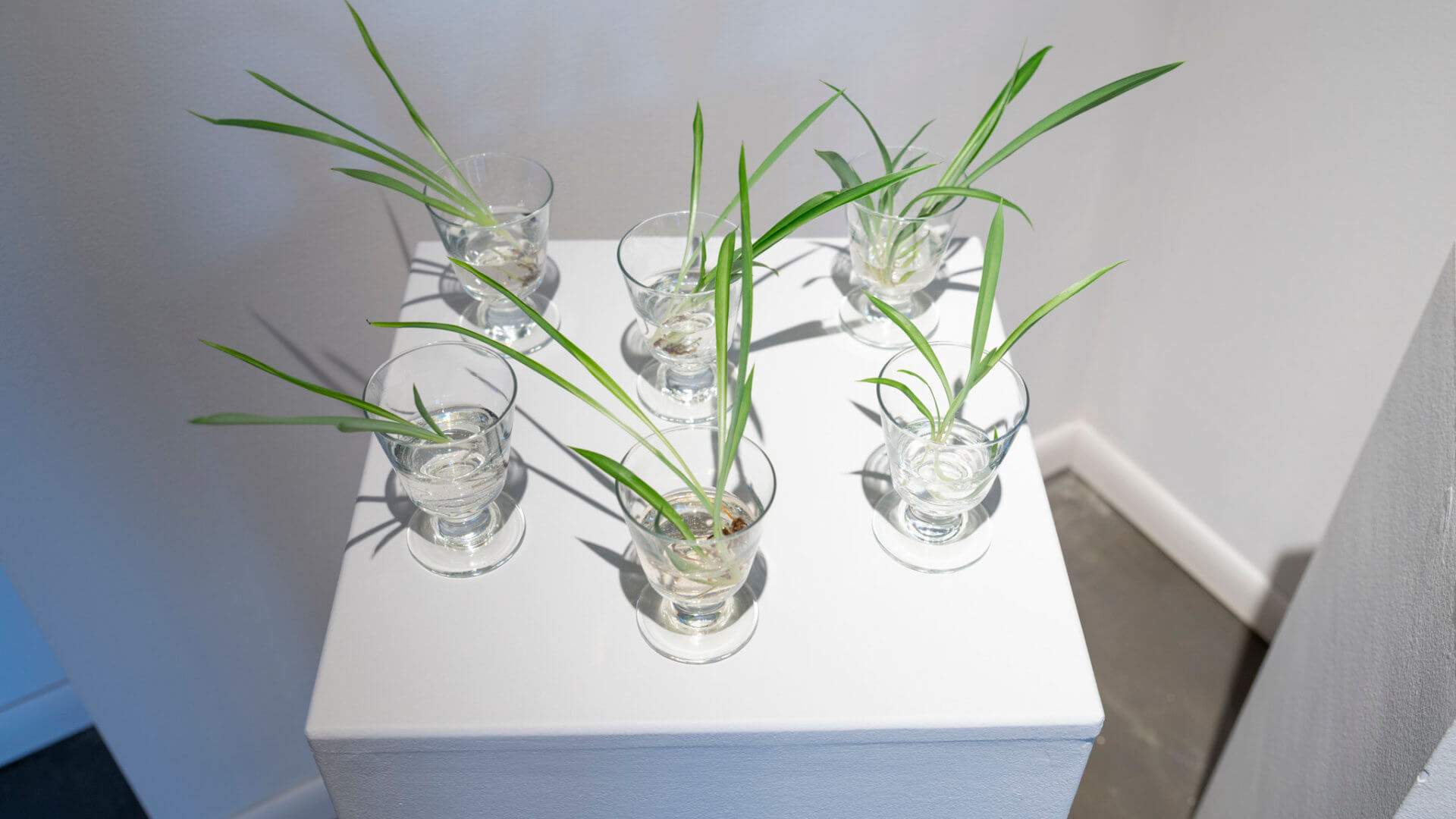 Free plants for gallery visitors. Part of the exhibition Futures Abundant/Futures Barren by April Dean. Image credit: Sarah Fuller.